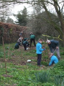 Tree planting 005